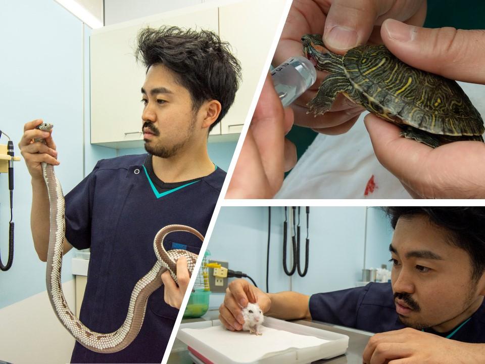 小動物・エキゾチック診療